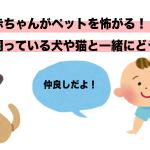 赤ちゃんがペットを怖がる!飼っている犬や猫と一緒にどう育てるべき?